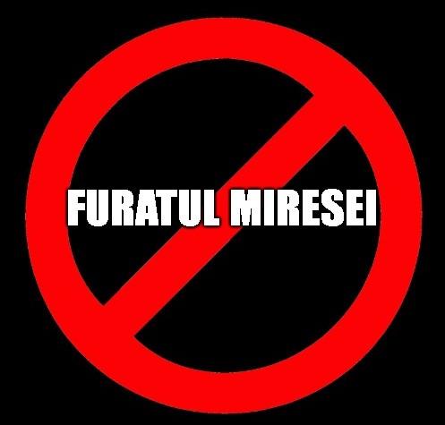 De ce as interzice Furatul Miresei?!